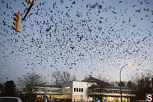 Murder Of Crows Over McDonalds
