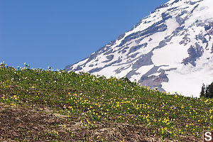 Ridge Covered In Flowers