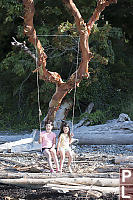 Double Swing Over Driftwood